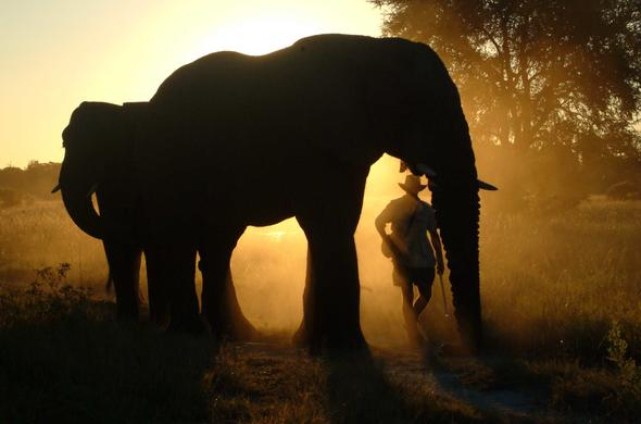 Walk with the Elephants in Okavango at Baines' Camp. Botswana