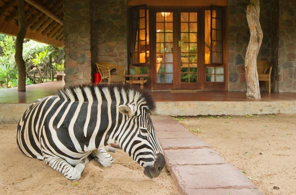 Blyde River Canyon Lodge zebra.