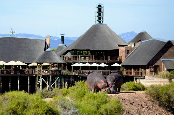Hippos roaming in front of the lodge.