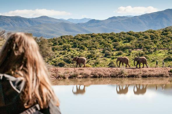 See Elephant on a Western Cape Safari at Buffelsdrift Game Lodge.