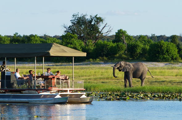 Elephant on the banks of the Chobe River in Botswana.