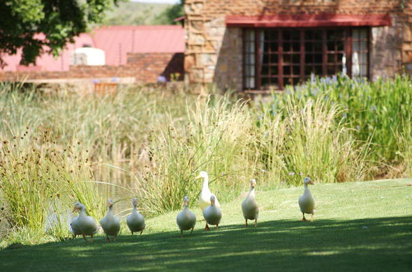 Critchley Hackle Lodge in Mpumalanga.