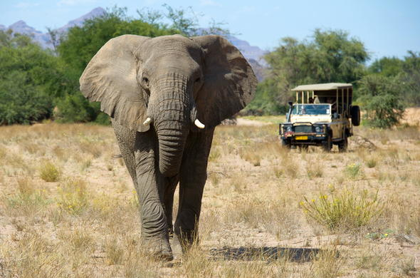 Spotting elephant during game drive at Damaraland Camp.