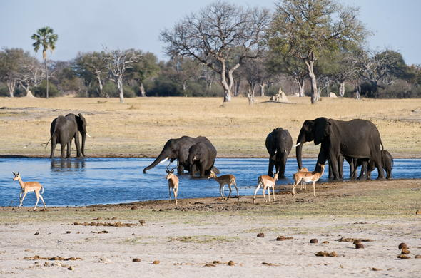 Hwange National Park wildlife in Zimbabwe.