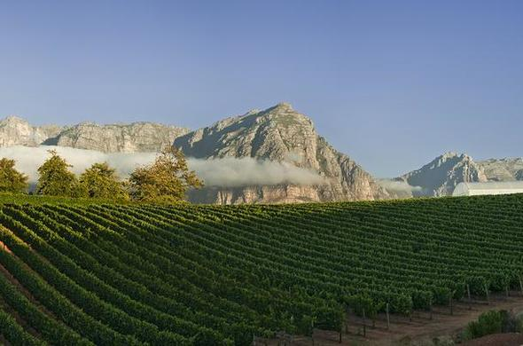 Sample delicious wines from the Cape Winelands region.