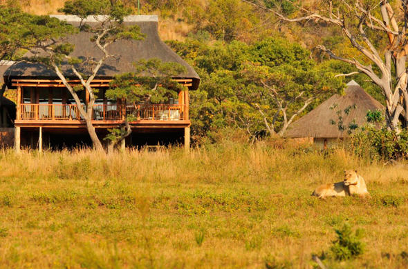Lion spotted in front of Ekuthuleni Lodge.