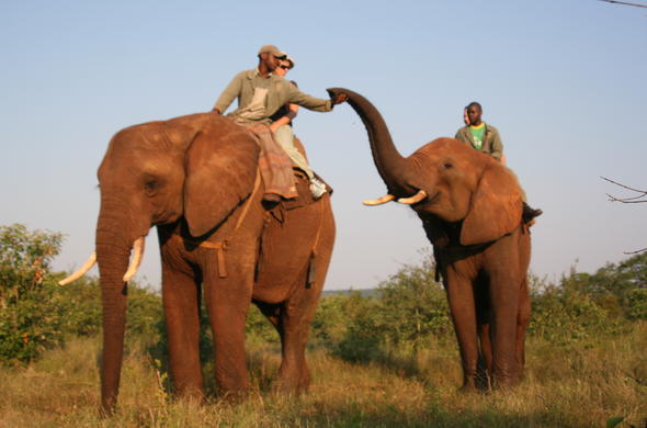Bond with these gentle giants on an Elephant Back Safari.