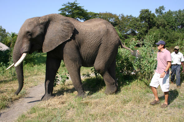 Elephant interaction in Zimbabwe.