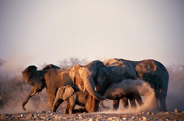 Elephants in Etosha. Leigh Kemp