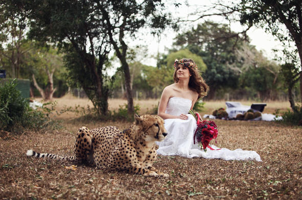 Emdoneni Lodge and Game Farm bride with Cheetah.