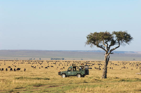 Following the Great Migration across the Mara in Kenya.