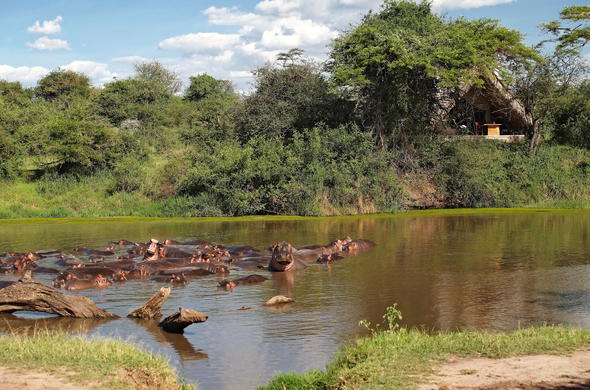 Watch as a bask of hippo play at Grumeti Serengeti Tented Camp.