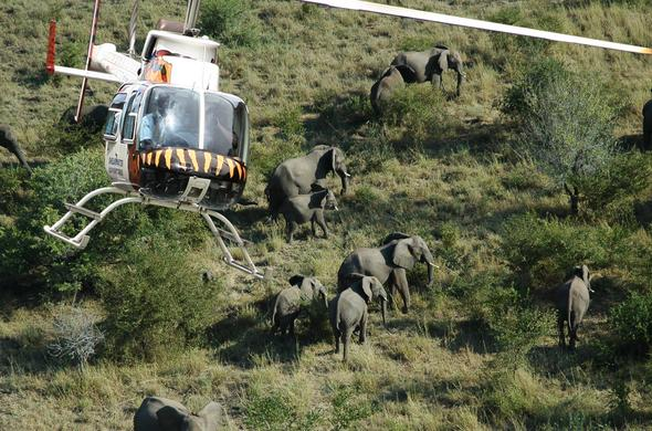 Safari by Helicopter. Zambezi National Park. Victoria Falls