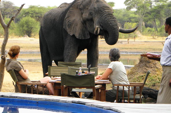 Elephant and guest interaction at The Hide Safari Camp.