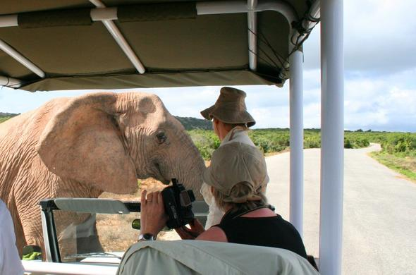 See elephants up close at Hitgeheim Lodge.