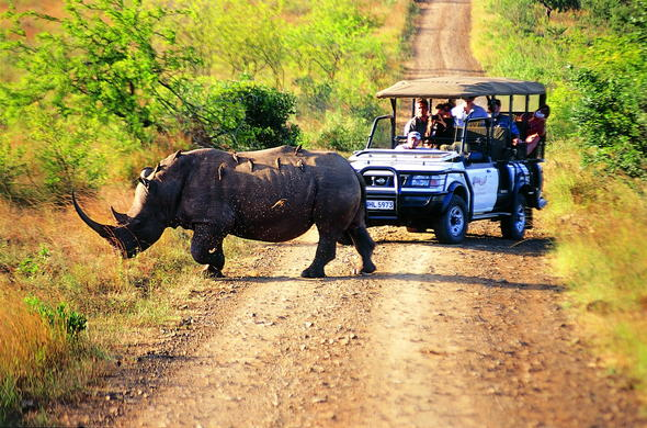 See rhino at Hluhluwe River Lodge on a game drive.