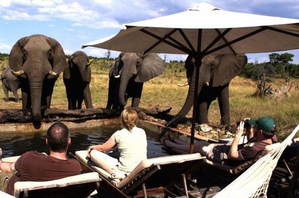 Elephants at Hwange Safari Lodge in Hwange National Park, Zimbabwe.