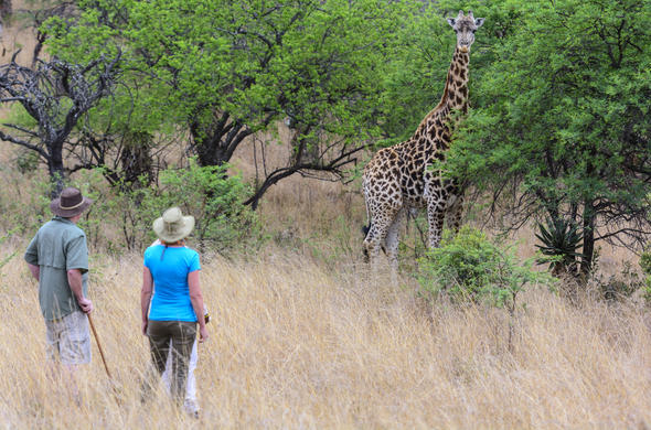 Walking safari at Isibindi Zulu Lodge.
