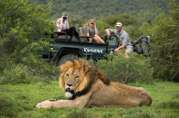 Game drives are offered at Kwandwe Private Game Reserve.