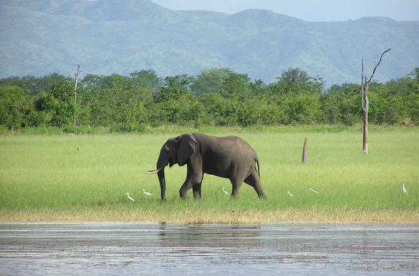 Elephant on the banks of Lake Kariba.