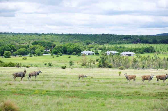 A herd of buck spotted adjacent Leeuwenhof Country Lodge & Garden Spa.