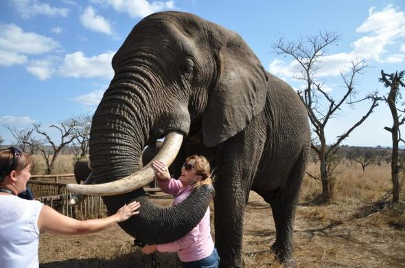Interact with elephants at Leopard Mountain Game Lodge.