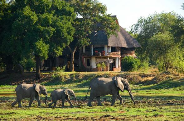 Elephants walking past Luangwa Safari House.
