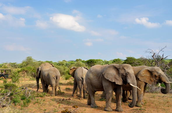 Elephants are among the wildlife of Mabula Game Reserve.