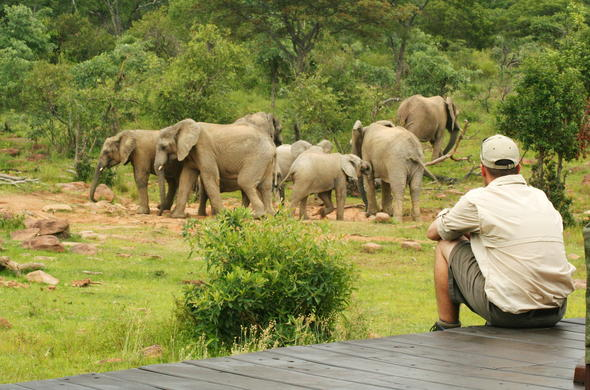 See Elephants from the deck of Makweti Safari Lodge.