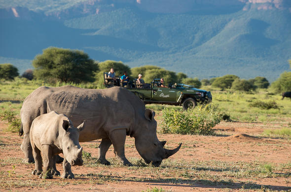 Enjoy a morning out in the reserve and spot rhino and other wildlife.