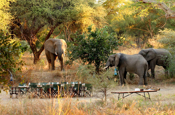 Enjoy breakfast and wonderful elephant sightings at