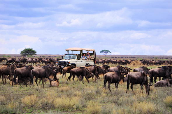 Experience the great migration in the Serengeti National Park.
