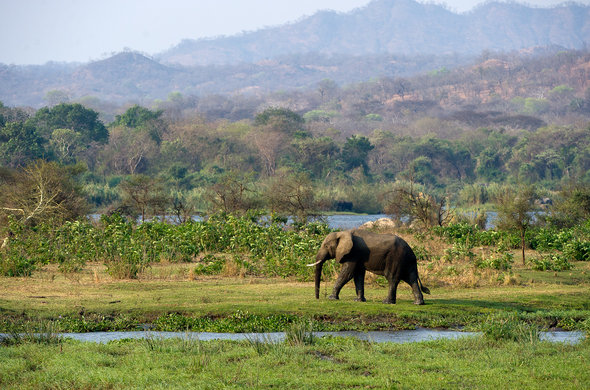 See Elephant on a Malawi safari.