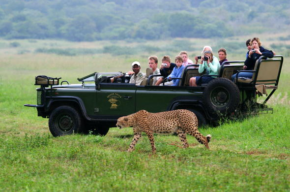 Enjoy game drives in the Mkuzi Game Reserve, KZN.