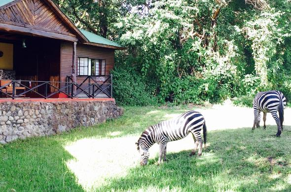 Image result for Mount Meru Game Lodge na Sanctuary, Arusha