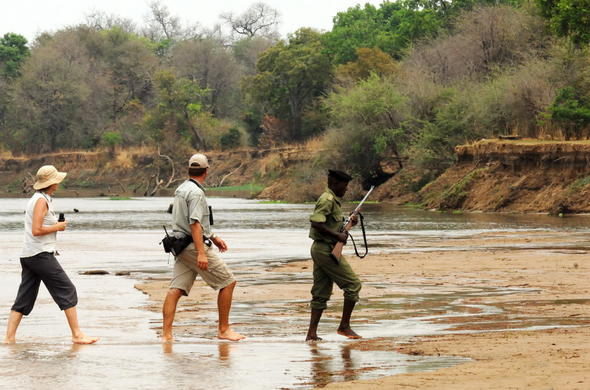 Walking safari Lower Zambezi.