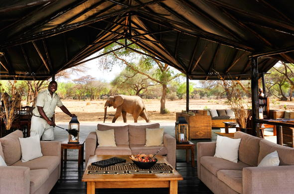 Elephant walking past the lounge at Old Mondoro.