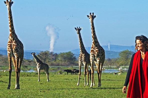 Enjoy wonderful sightings of giraffe and buffalo in Lake Naivasha.