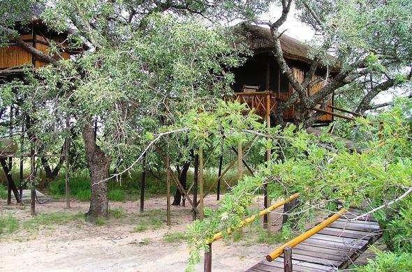 The Pezula tree houses are tucked away behind branches.