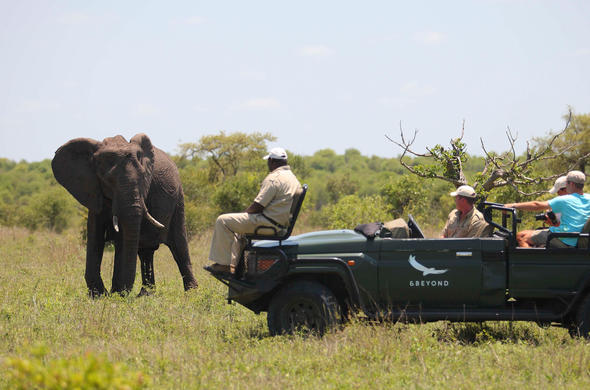 See elephant in Phinda Private Game Reserve while on a game drive.