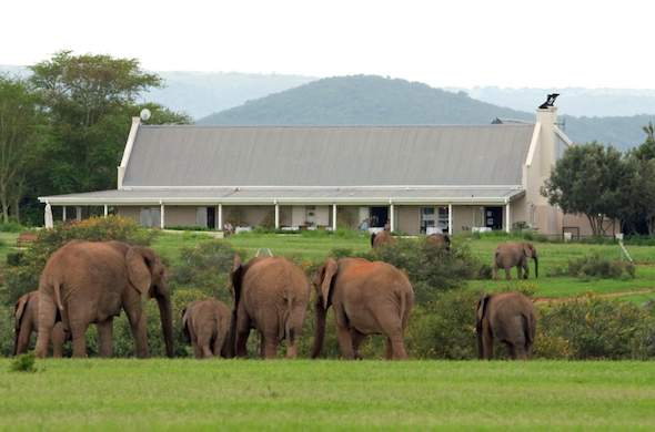 Elephants spotted right outside River Bend Lodge.