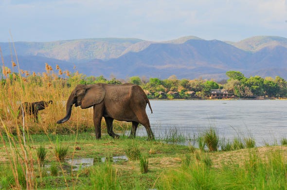 See Elephants at Royal Zambezi Lodge.