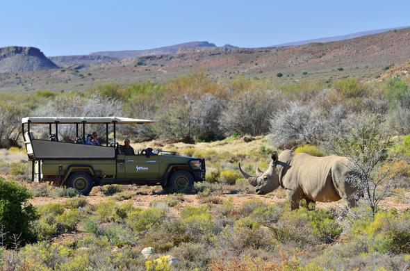 Guest spotting rhino on game drive at Sanbona Wildlife Reserve.