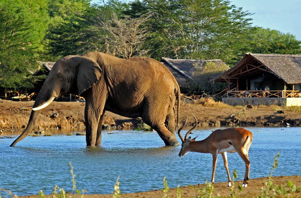 Elephant and antelope sighting at the adjacent waterhole at Satao Camp.