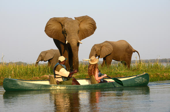 Canoe safari adventures on the Zambezi at Sausage Tree Camp.