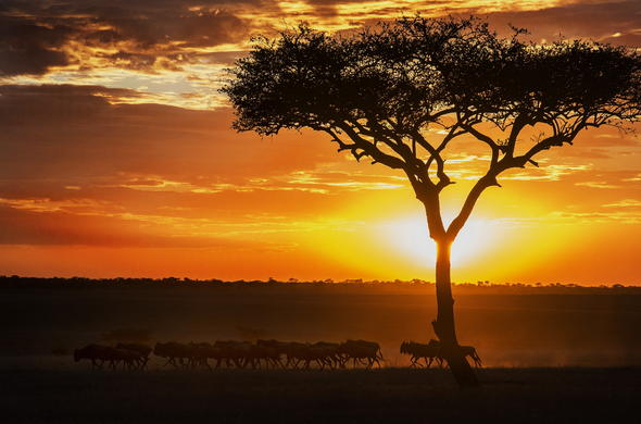 Take a evening game drive and enjoy the gorgeous sunsets in the park.