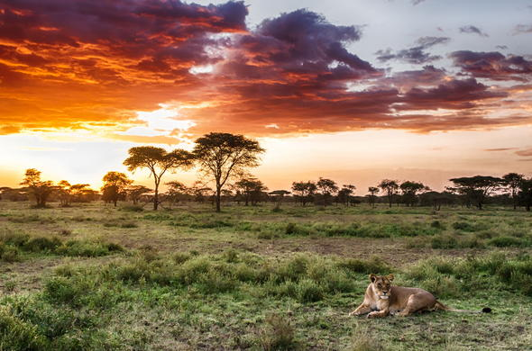 See lions and a variety of game in the Serengeti National Park.