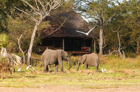 Two elephants spotted at Siwandu Camp.