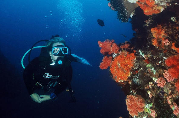 Sodwana Bay Lodge offers diving.