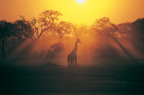 See a variety of wildlife in Zambia National Parks.